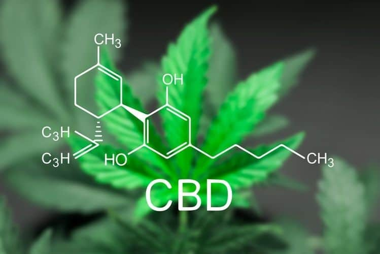 a beginner's guide to cannabidiol (cbd) A Beginner's Guide To Cannabidiol (CBD) cbd