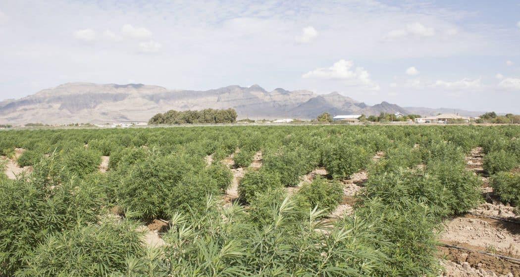 is hemp wyoming's next emerging industry? some legislators think so. Is hemp Wyoming's next emerging industry? Some legislators think so. hemp farm wyoming 1050x560