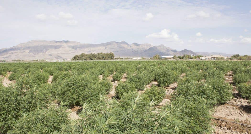 is hemp wyoming's next emerging industry? some legislators think so. Is hemp Wyoming's next emerging industry? Some legislators think so. hemp farm wyoming 1050x560