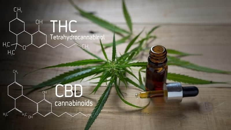 u.s cbd goes mainstream U.S CBD Goes Mainstream cbd thc